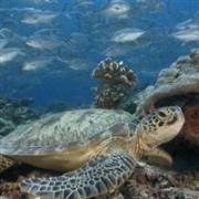 sea turtle tour